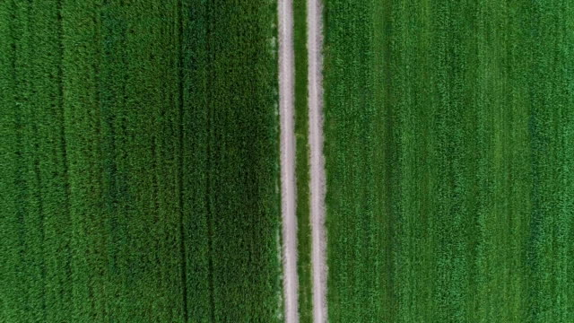 Green fields divided by country road. Aerial view video
