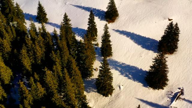 green forest and snowy mountains, aerial winter scene - wood texture filmów i materiałów b-roll