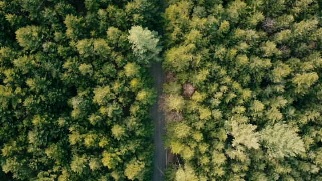 Green forest from above - Aerial drone view video