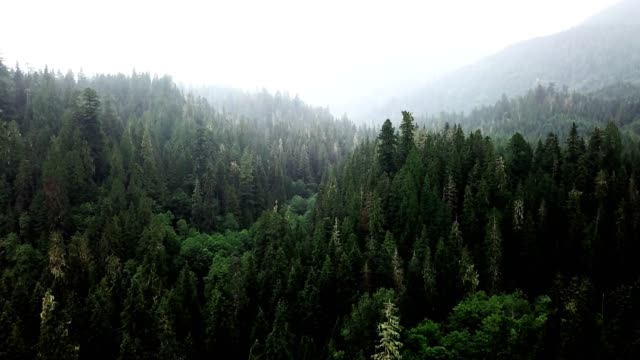 green forest in north america green forest in north america pine tree stock videos & royalty-free footage