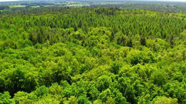 green forest in summer, aerial view, poland - wood texture filmów i materiałów b-roll