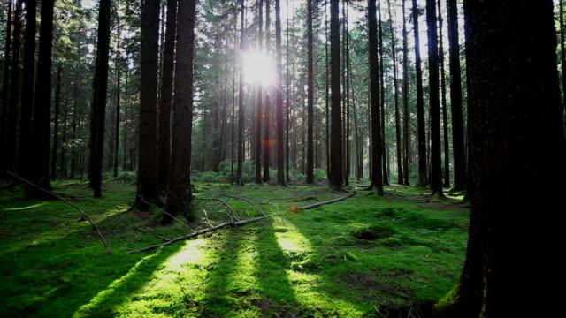 green forest in the sunlight tracking shot - kameraåkning på räls bildbanksvideor och videomaterial från bakom kulisserna