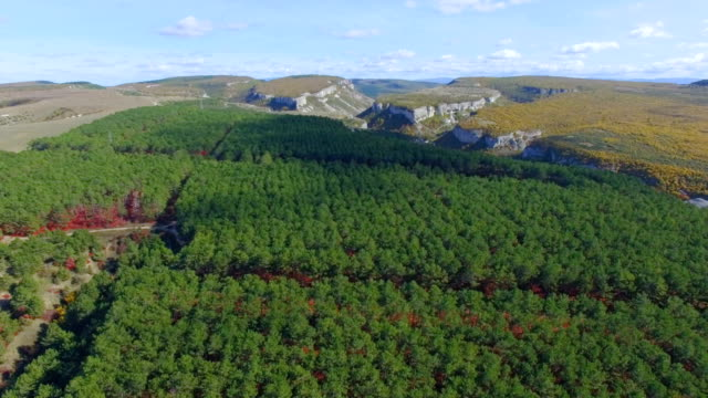 AERIAL: Green forest with red bushes on hills