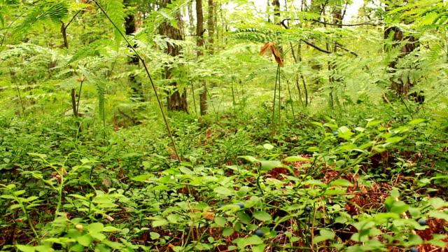 grünen wald mit bäumen und farn - baumgruppe stock-videos und b-roll-filmmaterial