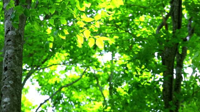 grüne wälder, grüne blätter - saftig stock-videos und b-roll-filmmaterial
