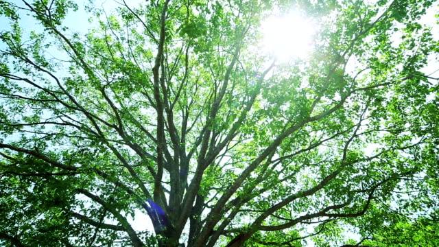 緑の森、緑の葉 ビデオ
