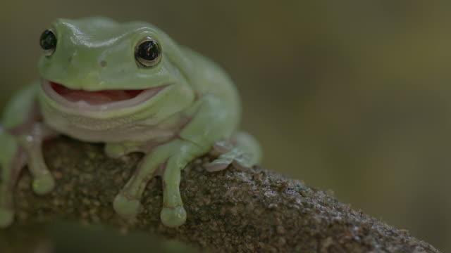 Green frog in a tree Green frog in a tree frog stock videos & royalty-free footage