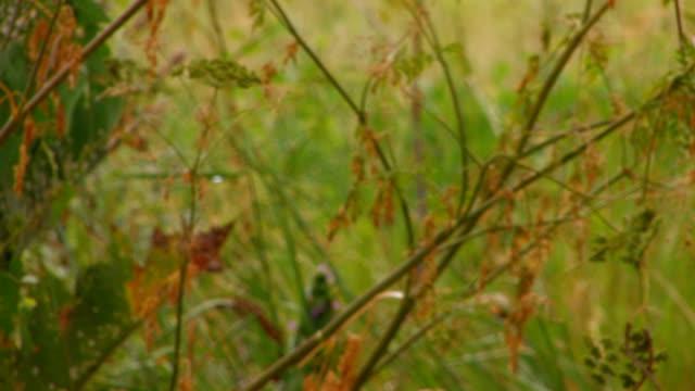 vidéos et rushes de hd vert herbe après la pluie gros plan - couleur saturée