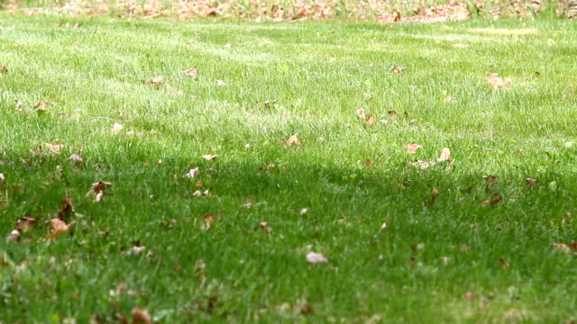 stockvideo's en b-roll-footage met groen gras achtergrond - s