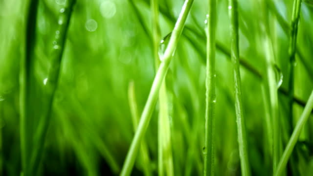 Green grass close-up super macro shooting. Green grass close-up super macro shooting abstract background. blade of grass stock videos & royalty-free footage