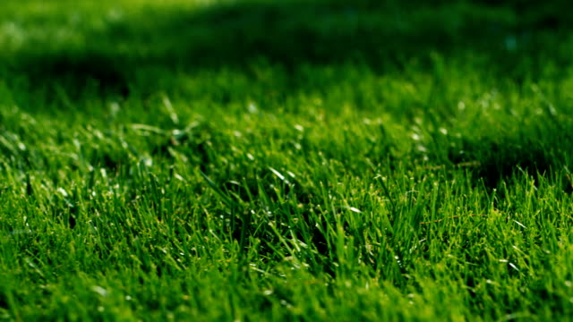 Green grass for background. Dolly shot