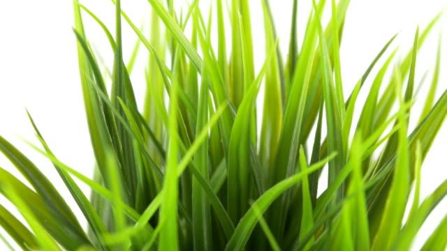 Green Grass In Ceramic Pot Closeup Tilt Movement