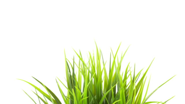 Green Grass In Ceramic Pot Panning Movement