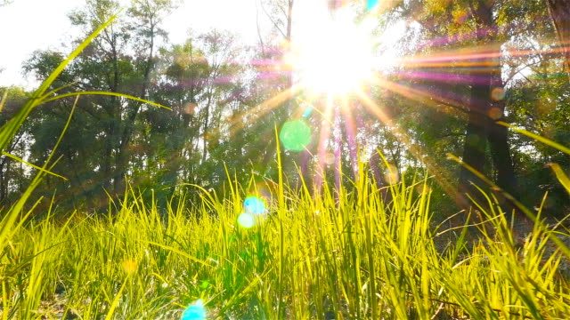 Green grass in the forest. Beautiful rays of sun on background. Poplar fluff. The camera is moving forward video