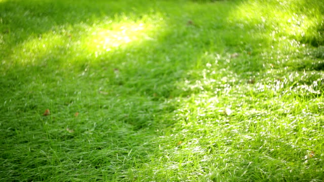 green grass in the summer park video