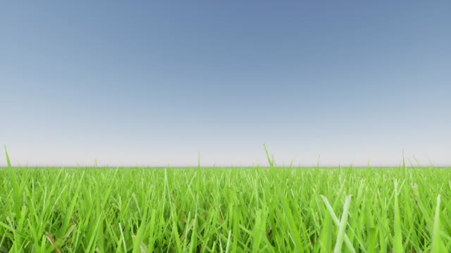 Green grass landscape and clear blue sky 4k