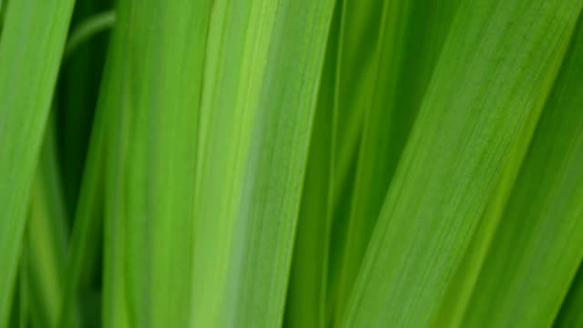 Best Grass Texture Stock Videos and Royalty-Free Footage - iStock