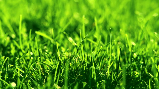 green grass on the wind in park. beautiful summer green background. - landscaped video stock e b–roll