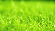 istock Green grass on the wind in park. Beautiful summer green background. 1193020386