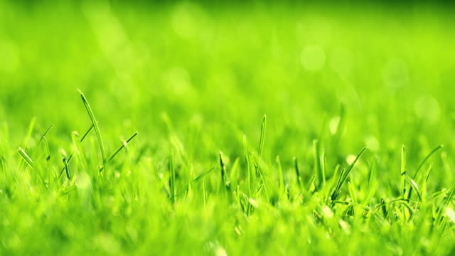 Green grass on the wind in park. Beautiful summer green background.