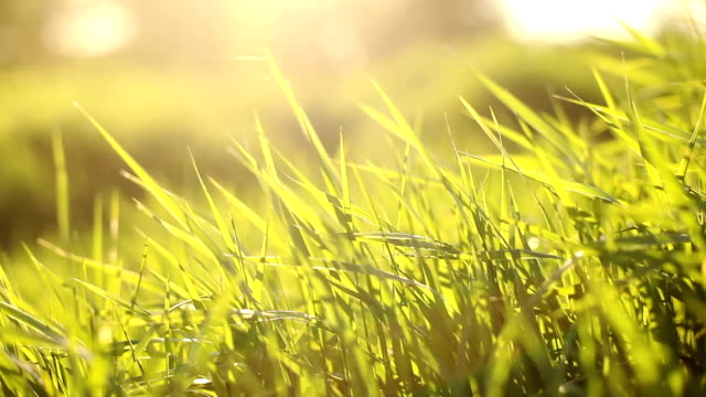 Green grass on the wind Moving grass in the wind blade of grass stock videos & royalty-free footage