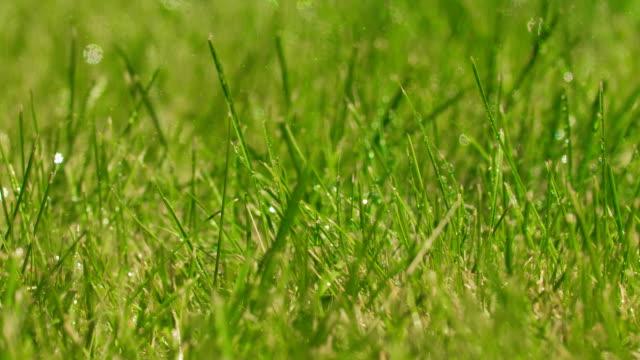 stockvideo's en b-roll-footage met groen grasplant bij regen met waterdruppels. - plantdeel