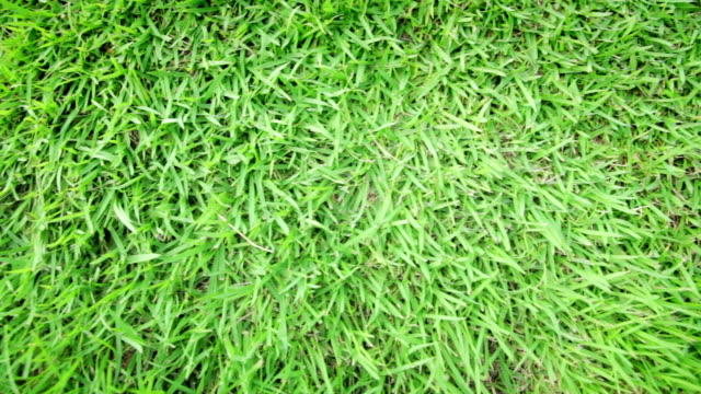 Green grass top view for Backgrounds,Dolly shot
