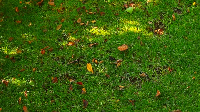 Green Grass Tree Shadow Autumn Leafs Hd Footage Stock Video Download Video Clip Now Istock