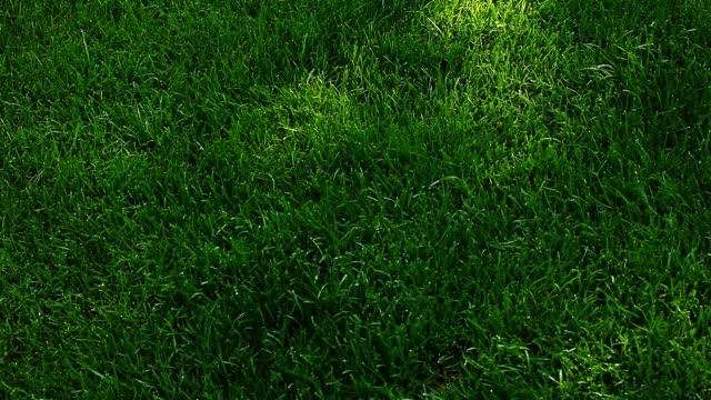 green grass tree shadow autumn leafs hd footagegreen grass tree shadow autumn leafs hd footage - penombra video stock e b–roll