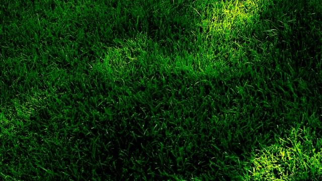 green grass tree shadow hd footage - penombra video stock e b–roll