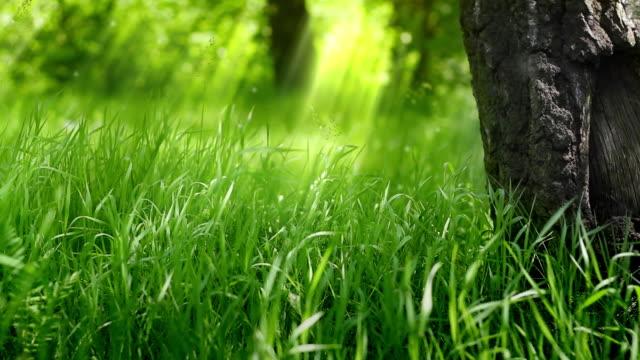 Green grass under the tree.