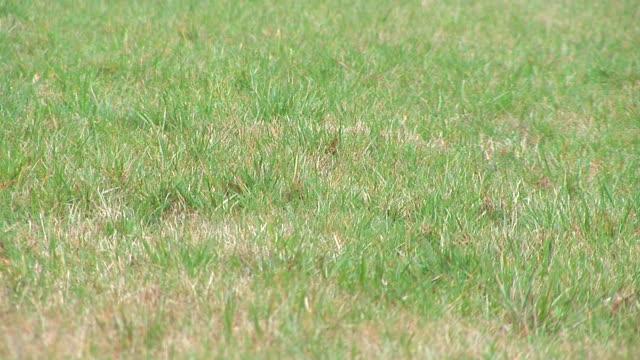 hd: green grass - intoning bildbanksvideor och videomaterial från bakom kulisserna