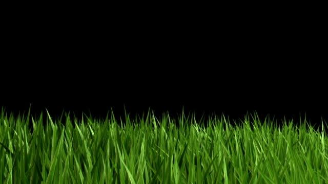 green grass - gräsmatta odlad mark bildbanksvideor och videomaterial från bakom kulisserna