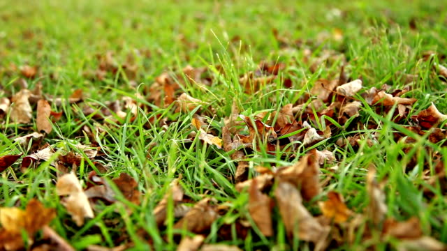 Green grass with brown dry leaves, slide shot