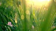 istock Green Grass with sunlight 952366926