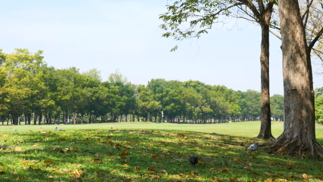 Green Grass Yard and Trees in the Park video