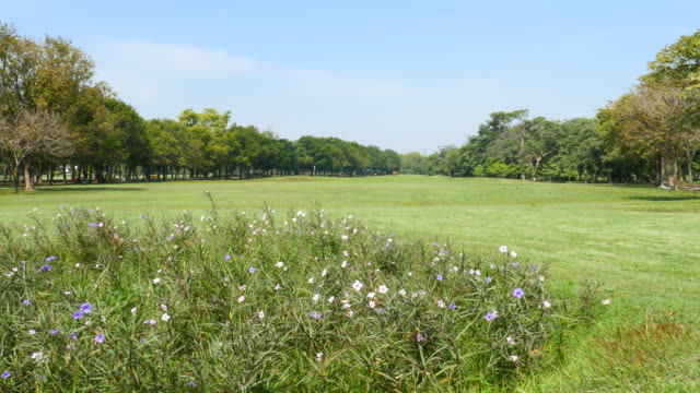 Green Grass Yard in Green Park video