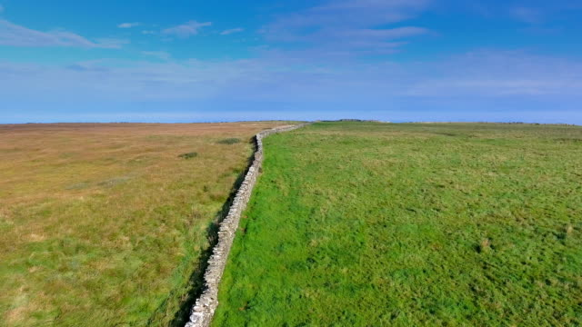 Green grasses on the fields in Cliffs of Moher in Ireland video