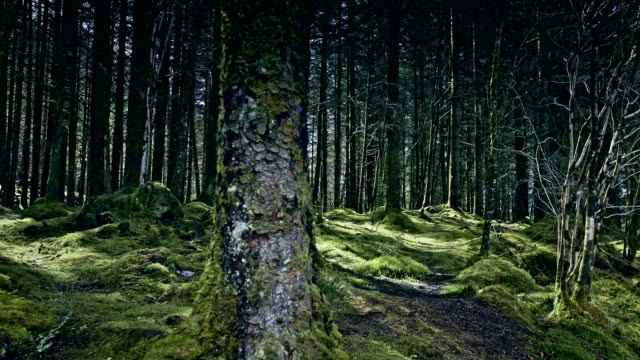 green hills covered with forest. beauty in nature. scotland - fort william video stock e b–roll