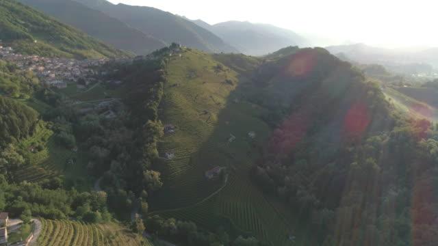 緑の丘のブドウ畑 ビデオ