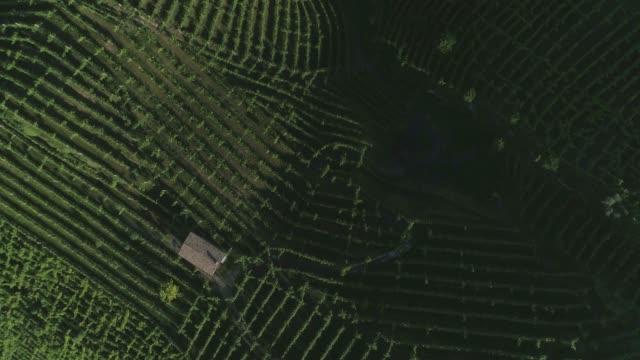 green hills vineyards