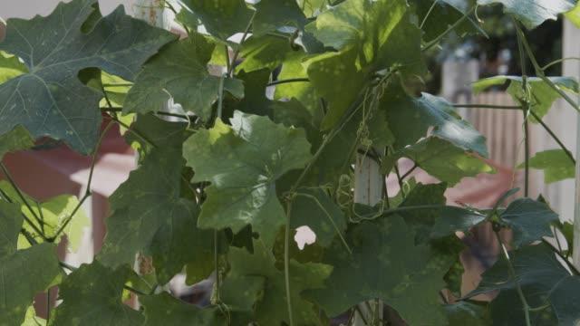 정원에서 물에 녹색 아이비 조롱 - 아이비 스톡 비디오 및 b-롤 화면