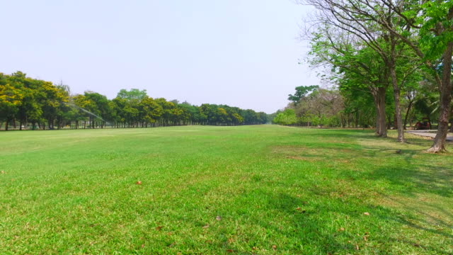 Green Lawn and Trees in Green Park video