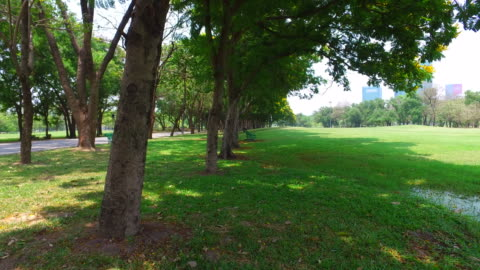 Green Lawn and Trees in Green Park 4K Dolly Shot: Green park in sunny day of summer season with beautiful weather in the morning and the fields of green lawns and big green trees. dolly shot stock videos & royalty-free footage