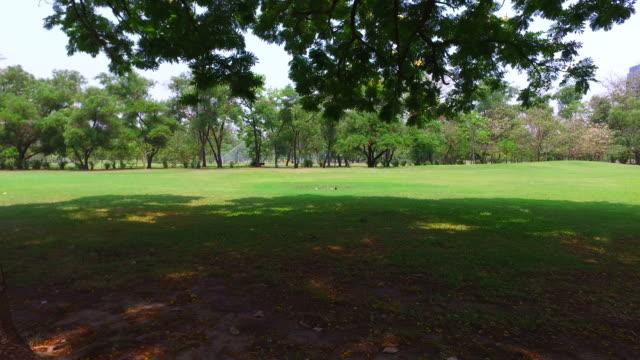 verde prato e alberi nel parco verde - carrellata video stock e b–roll