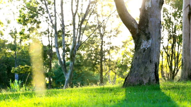 Green lawn in city park under sunny light video