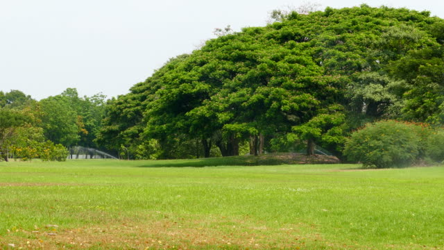 Green Lawns and Big Trees in Green Park video