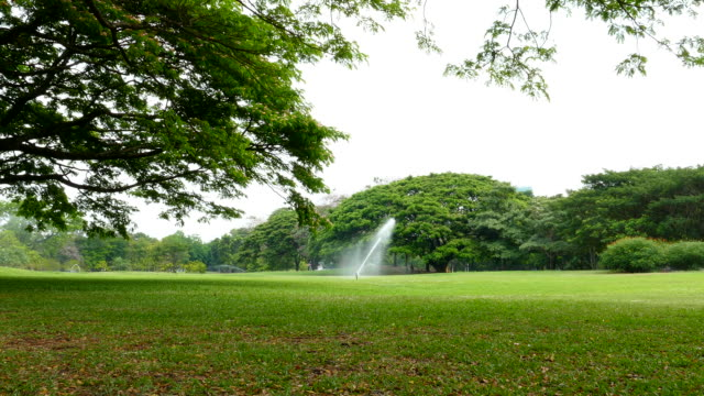 Green Lawns and Trees in Green Park video