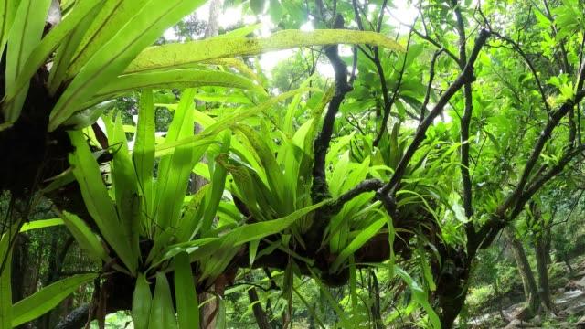 Green leaf fern on tree in tropical rainforest