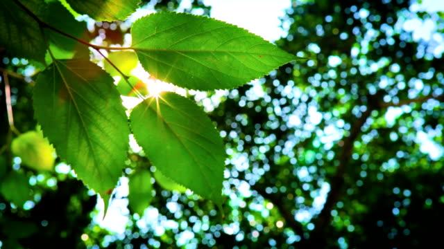 グリーンリーフで、晴れた日 - 木漏れ日点の映像素材/bロール